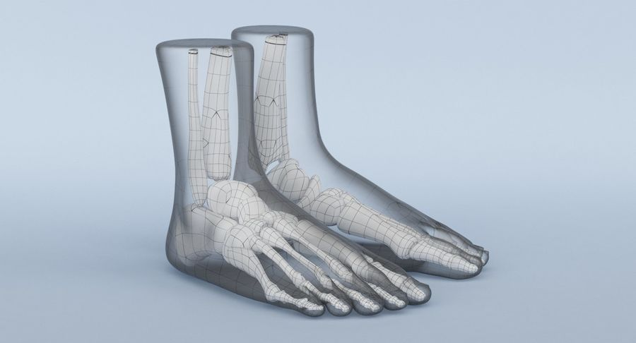 Foot Anatomy Blue royalty-free 3d model - Preview no. 16