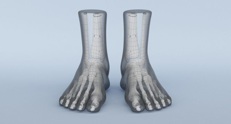 Foot Anatomy Blue royalty-free 3d model - Preview no. 14