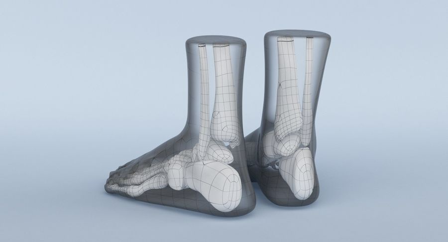 Foot Anatomy Blue royalty-free 3d model - Preview no. 21