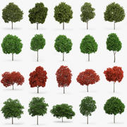 Maple Trees Collection 3d model
