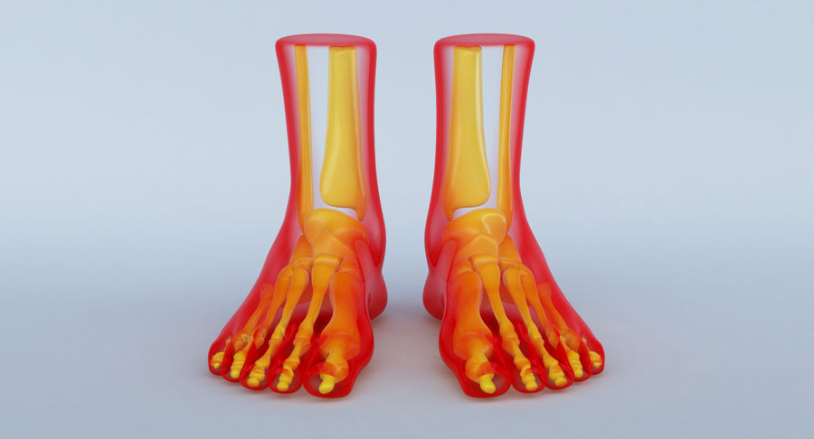 Foot Anatomy Red royalty-free 3d model - Preview no. 2