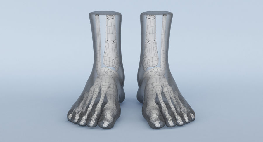 Foot Anatomy Red royalty-free 3d model - Preview no. 14