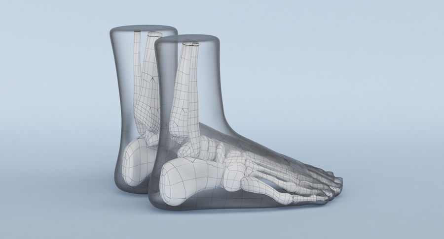 Foot Anatomy Red royalty-free 3d model - Preview no. 18