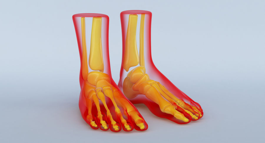 Foot Anatomy Red royalty-free 3d model - Preview no. 3
