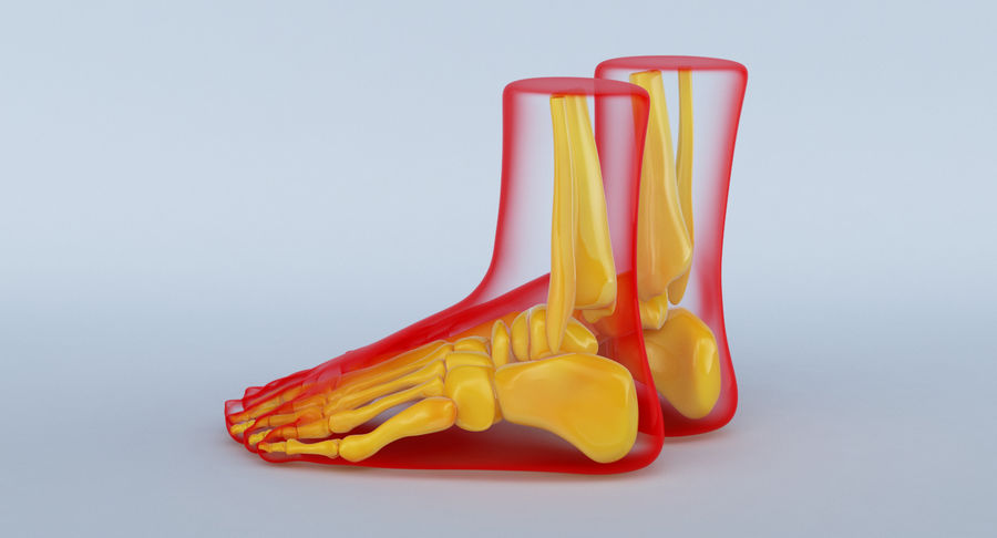 Foot Anatomy Red royalty-free 3d model - Preview no. 10