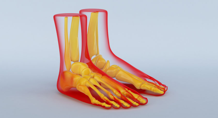 Foot Anatomy Red royalty-free 3d model - Preview no. 4
