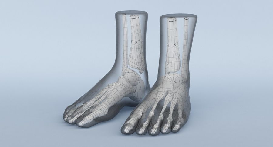 Foot Anatomy Red royalty-free 3d model - Preview no. 25