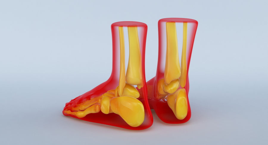 Foot Anatomy Red royalty-free 3d model - Preview no. 9