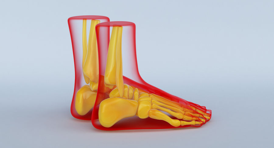 Foot Anatomy Red royalty-free 3d model - Preview no. 6