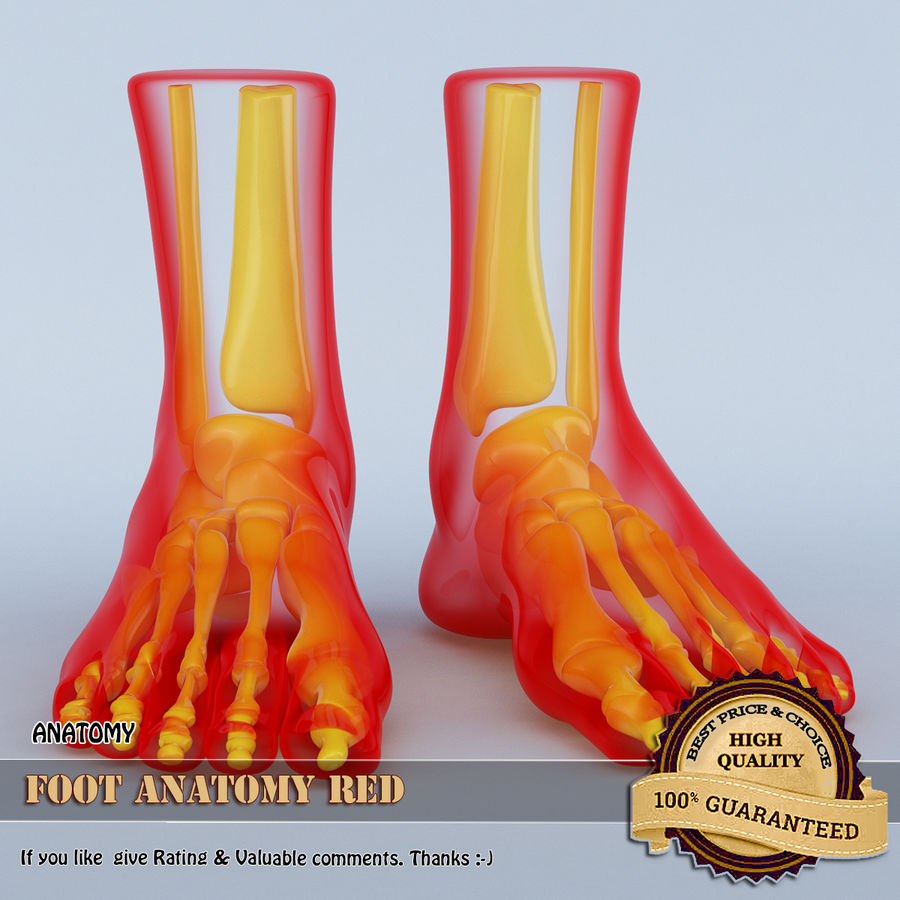 Foot Anatomy Red royalty-free 3d model - Preview no. 1