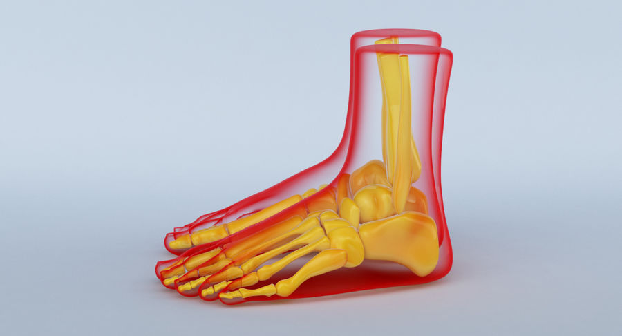 Foot Anatomy Red royalty-free 3d model - Preview no. 11