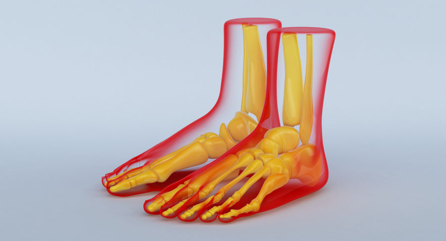 Foot Anatomy Red royalty-free 3d model - Preview no. 12