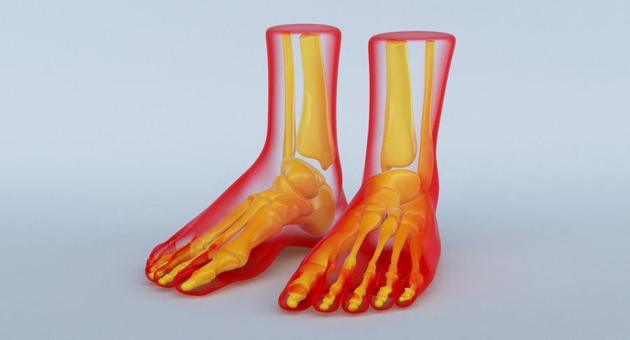 Foot Anatomy Red royalty-free 3d model - Preview no. 13