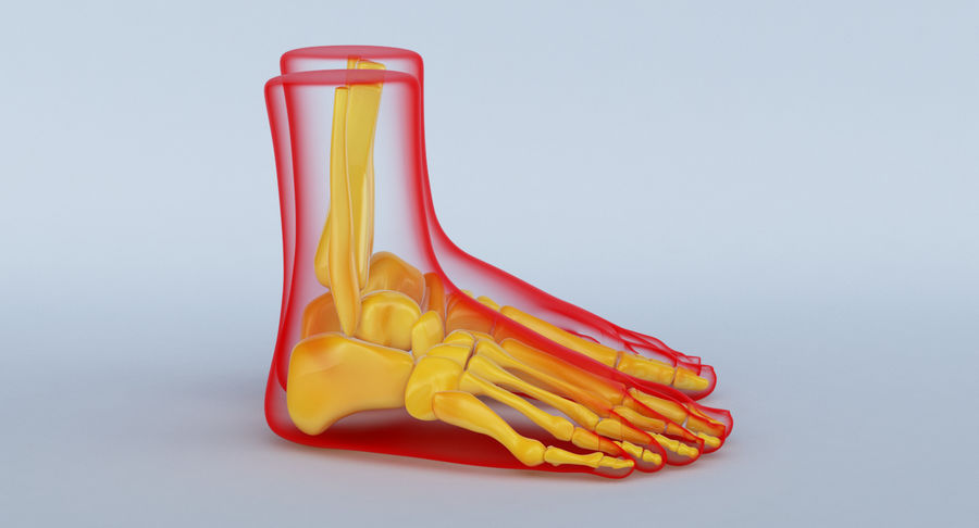 Foot Anatomy Red royalty-free 3d model - Preview no. 5