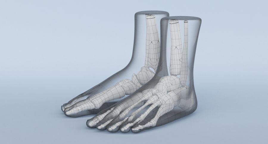 Foot Anatomy Red royalty-free 3d model - Preview no. 24