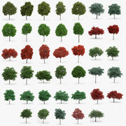 40 Oak and Maple Trees 3d model