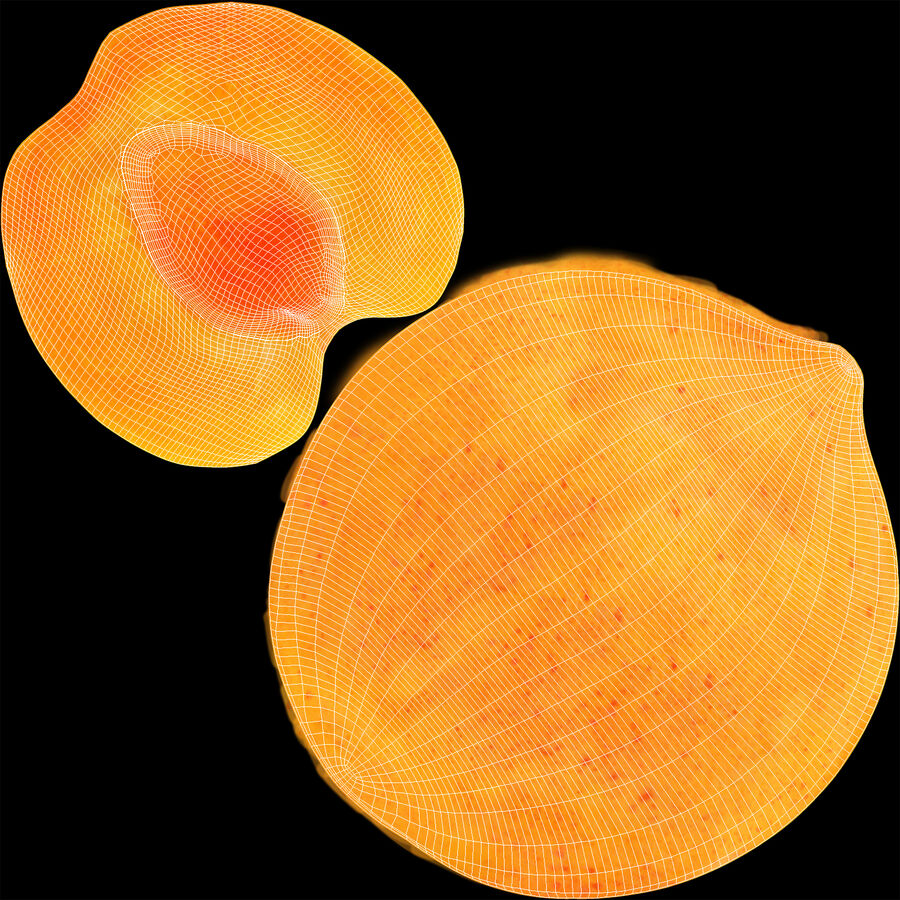 Apricot Cross Section 01 royalty-free 3d model - Preview no. 8