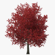 Jesienią klon czerwony drzewo 3d model