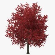 赤いカエデの木の秋 3d model