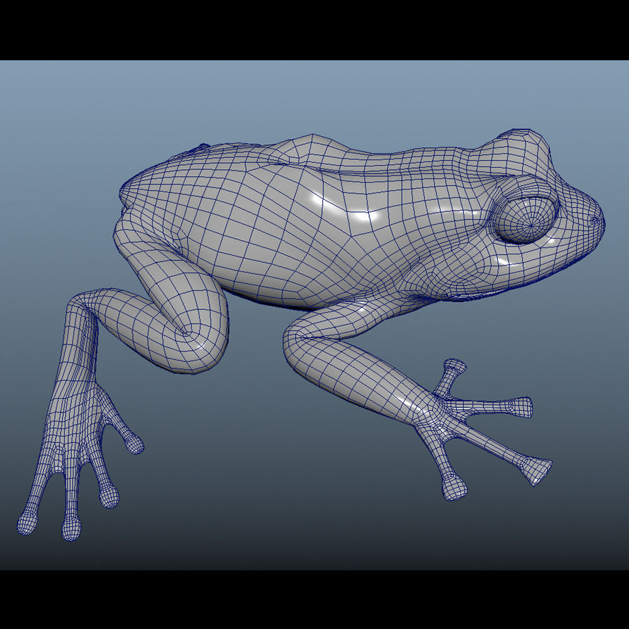 Blue Poison Frog Rigged royalty-free 3d model - Preview no. 10