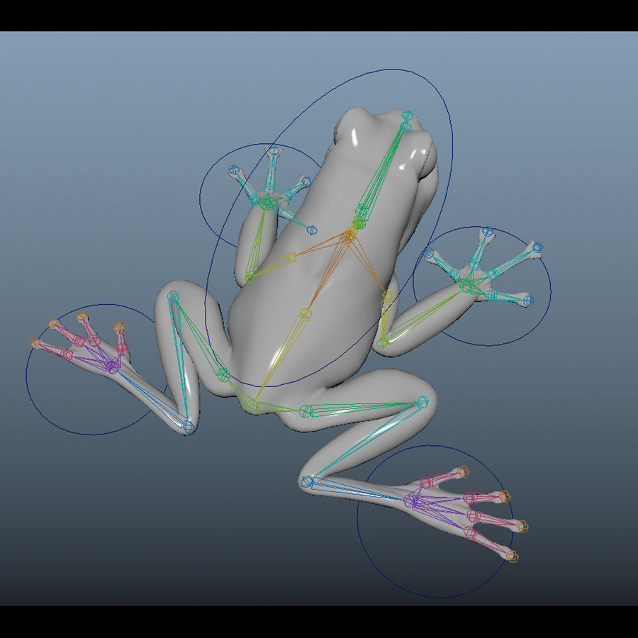 Blue Poison Frog Rigged royalty-free 3d model - Preview no. 7