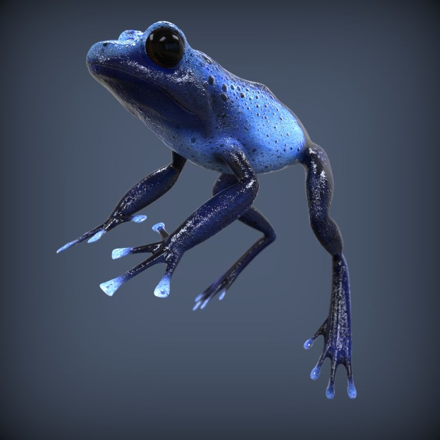 Blue Poison Frog Rigged royalty-free 3d model - Preview no. 2