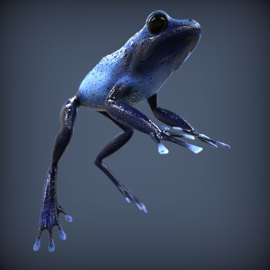Blue Poison Frog Rigged royalty-free 3d model - Preview no. 5