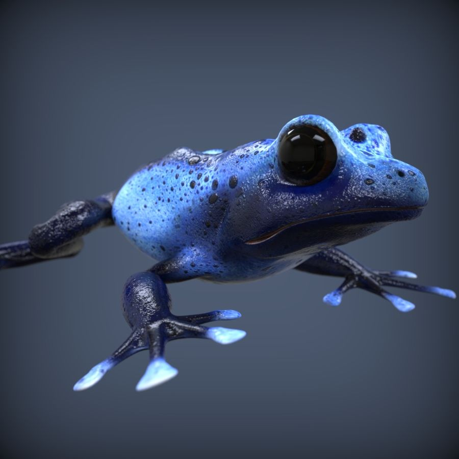 Blue Poison Frog Rigged royalty-free 3d model - Preview no. 6