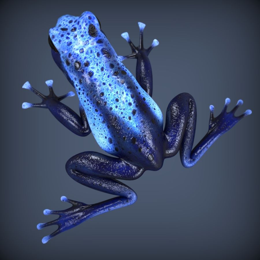 Blue Poison Frog Rigged royalty-free 3d model - Preview no. 3