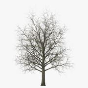 赤いカエデの木の冬 3d model