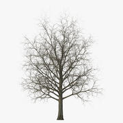 Red Maple Tree Winter 3d model