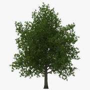 Red Maple Tree Summer 3D Model 3d model