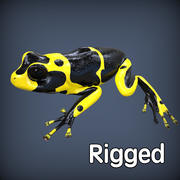 Poison Frog Yellow Rigged 3d model