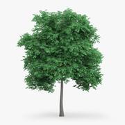 İngilizce Meşe Ağacı 6.6m 3d model