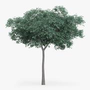 Northern Red Oak Tree 8.2m 3d model