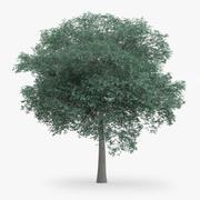 Northern Red Oak Tree 14m 3d model