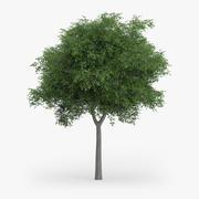 Avusturya Meşe Ağacı 7.7m 3d model
