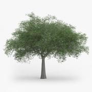 Avusturya Meşe Ağacı 11.4m 3d model