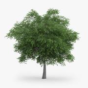 Austrian Oak Tree 5.8m 3d model