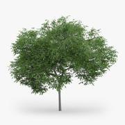 Avusturya Meşe Ağacı 5m 3d model
