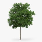 Japon Akça Ağaç 8.7m 3d model