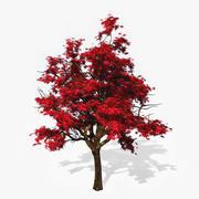Kırmızı Japon Akçaağaç 3d model