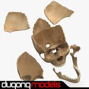 Ayrı Kemikler ile İnsan Kafatası 3d model