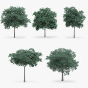 5 Northern Red Oak Trees 3d model