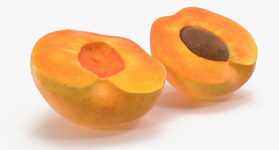 Apricot Cross Section 02 royalty-free 3d model - Preview no. 7
