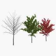 若い木赤いカエデ3Dモデルコレクション 3d model