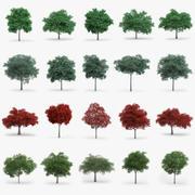 Oak Trees Collection 3d model