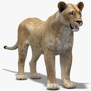 Dişi aslan (LP) 3d model