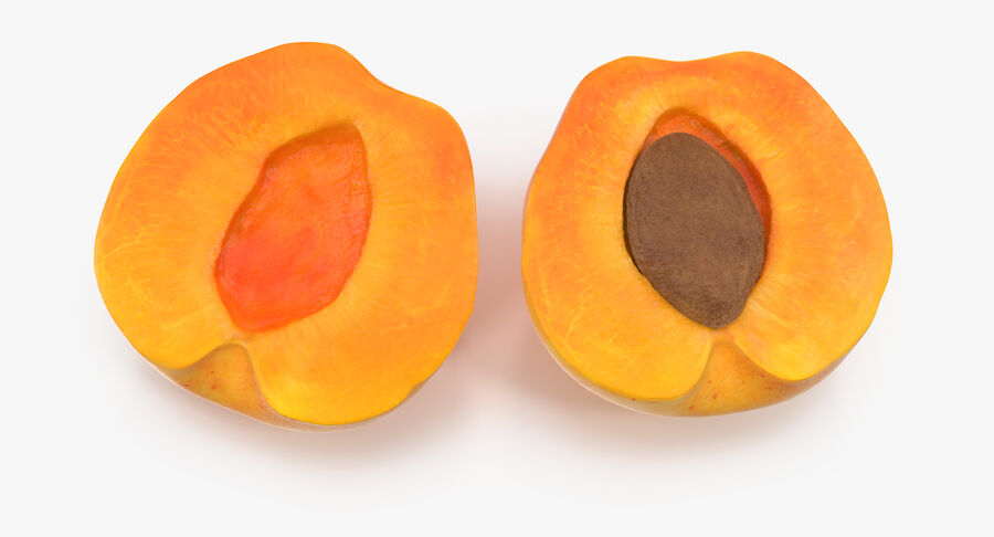 Apricot Cross Section 03 royalty-free 3d model - Preview no. 6