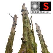 Floresta Velha 3d model